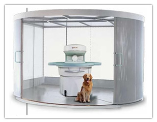 What Is Your Dog Thinking? Brain Scans Unleash Canine Secrets...